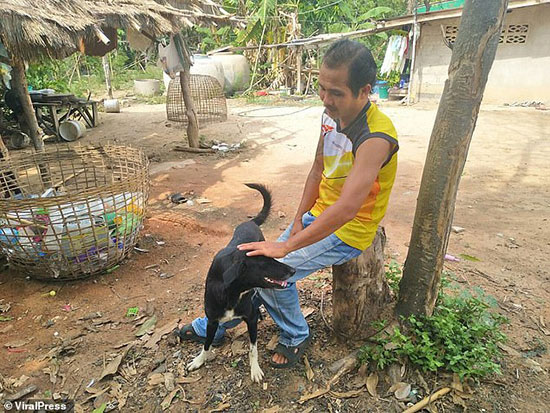الكلب وصاحبه بعد إنقاذ الطفل فى تايلاند