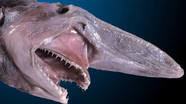 عفريت القرش