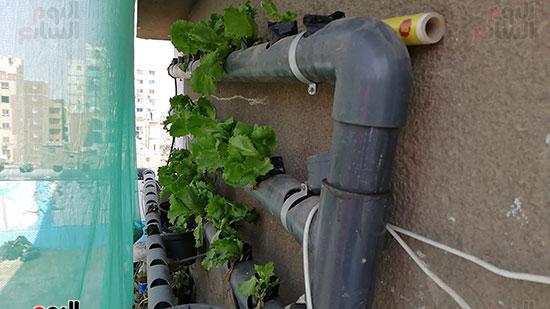 زراعة الأسطح بالقاهرة حل سحرى لمشاكل التلوث  (1)