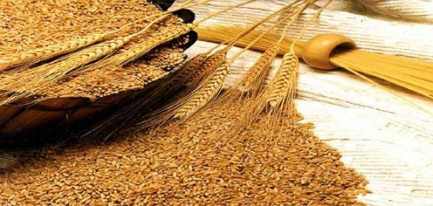 نخالة القمح