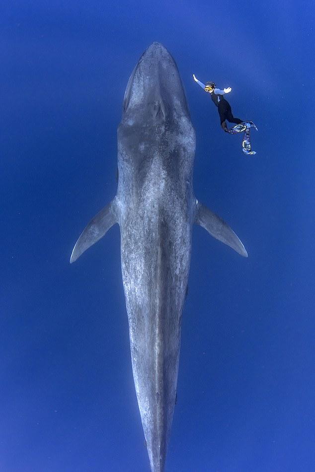 الغواص مع الحوت