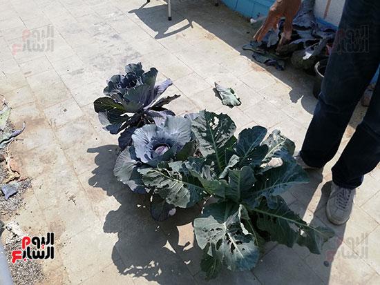 زراعة الأسطح بالقاهرة حل سحرى لمشاكل التلوث  (9)