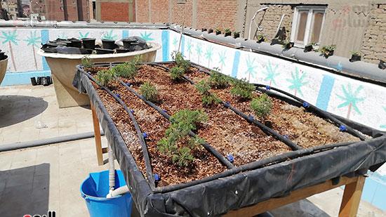 زراعة الأسطح بالقاهرة حل سحرى لمشاكل التلوث  (6)