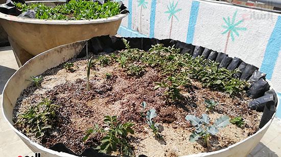 زراعة الأسطح بالقاهرة حل سحرى لمشاكل التلوث  (7)