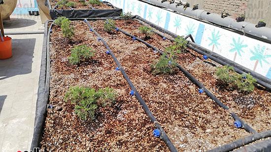 زراعة الأسطح بالقاهرة حل سحرى لمشاكل التلوث  (5)