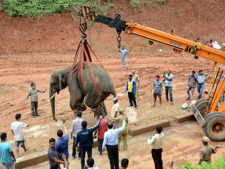 نقل الفيل إلى احدى الحدائق