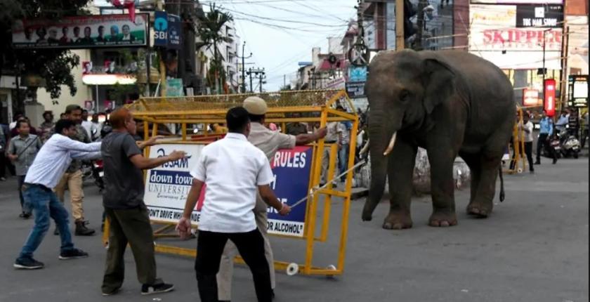 محاولات لتهدئة الفيل