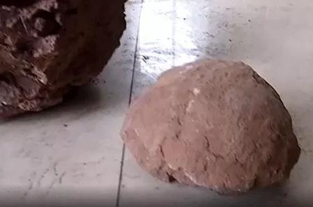بيض ديناصور