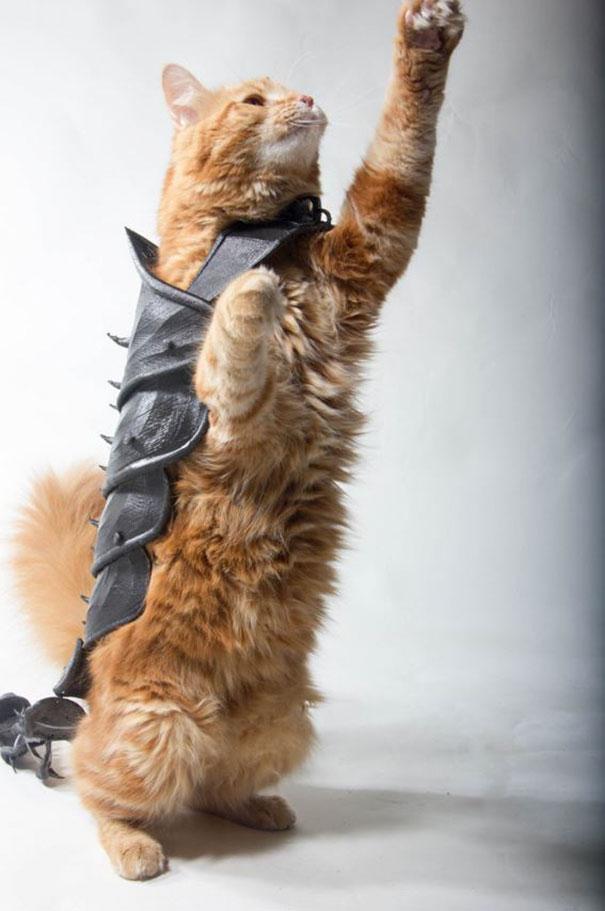 رجل يصمم درعا ثلاثي الأبعاد لحماية القطط