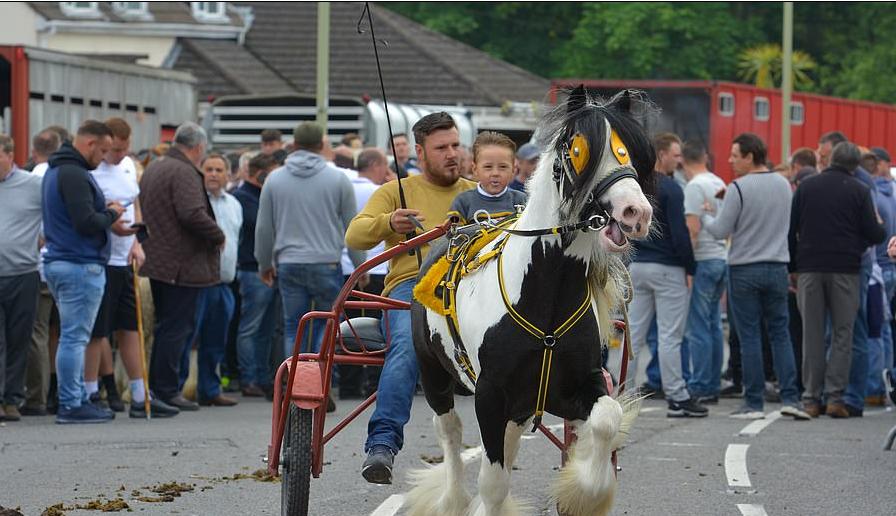 معرض الخيول السنوى