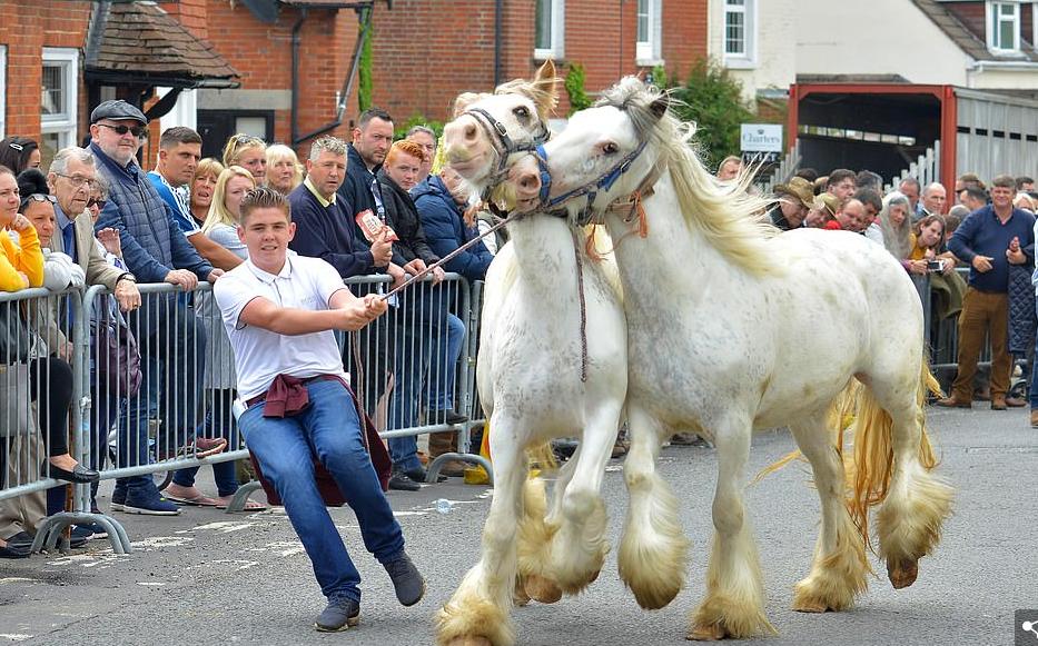 معرض ويكهام للخيول