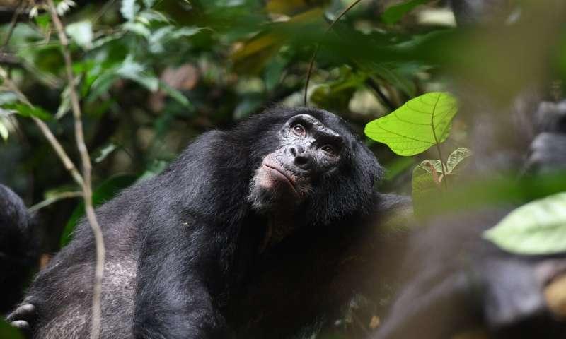 القرود 2
