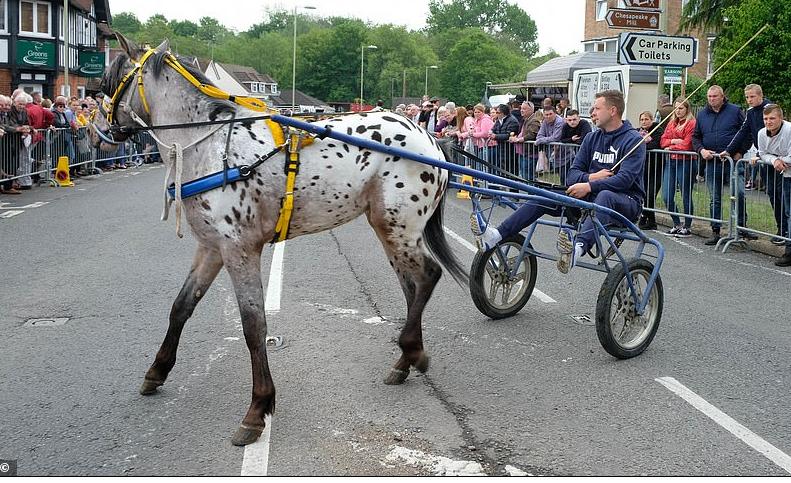 أنواع مختلفة من الخيول