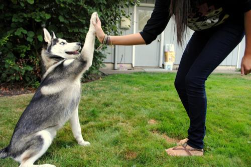 نصائح للتعامل مع الكلب (2)