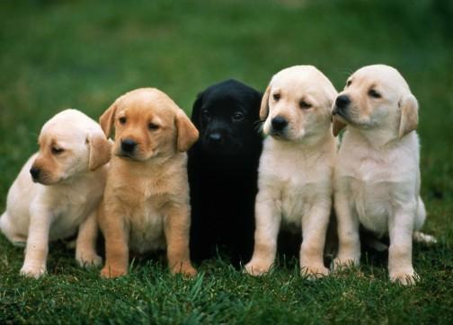 نصائح للتعامل مع الكلب (4)