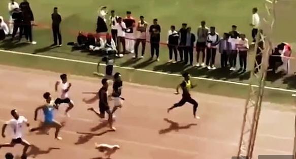 الكلب يشارك فى السباق