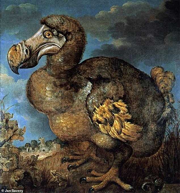 مزاد على طائر الدودو (3)