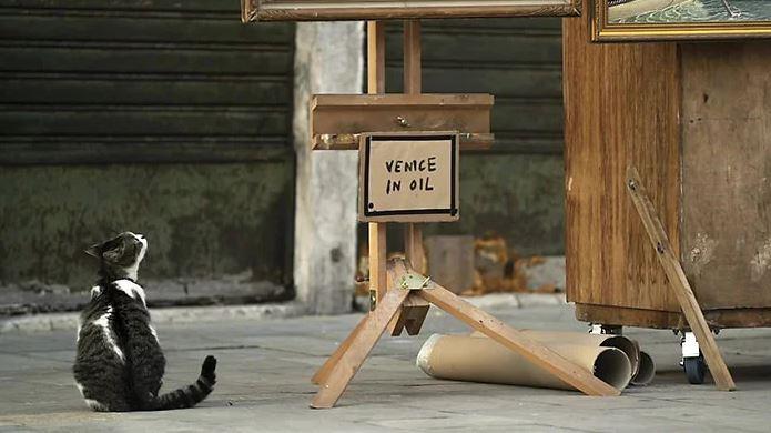 قطة تشاهد بانكسى