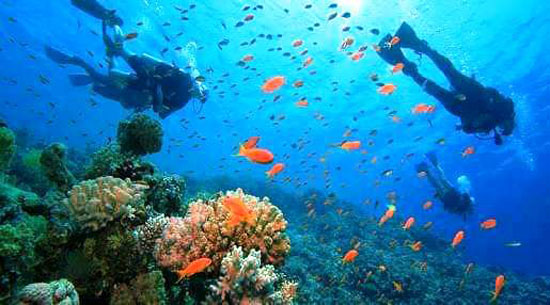 البحر الأحمر (10)