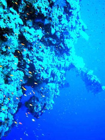 البحر الأحمر (4)