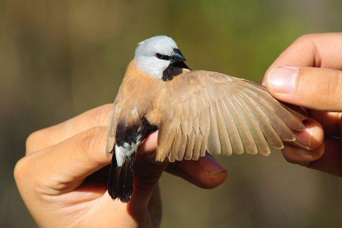 الطائر الصغير