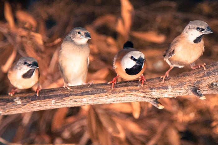 الطائر المهدد بالانقراض