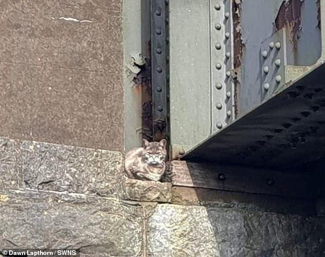 عملية إنقاذ قطة يتكلف 5 ألاف إسترلينى..صور  (5)