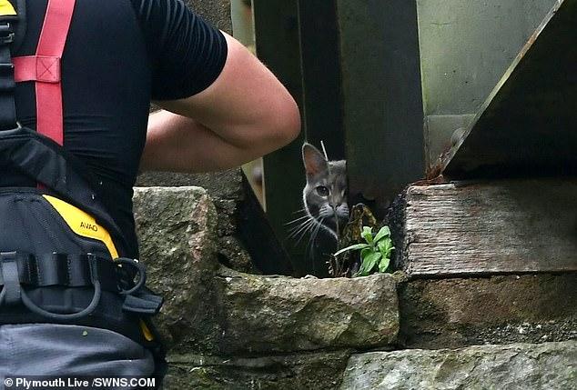 عملية إنقاذ قطة يتكلف 5 ألاف إسترلينى..صور  (4)