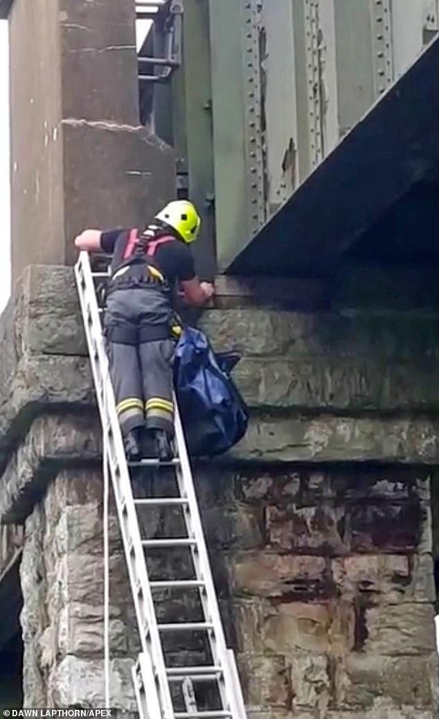 عملية إنقاذ قطة يتكلف 5 ألاف إسترلينى..صور  (3)