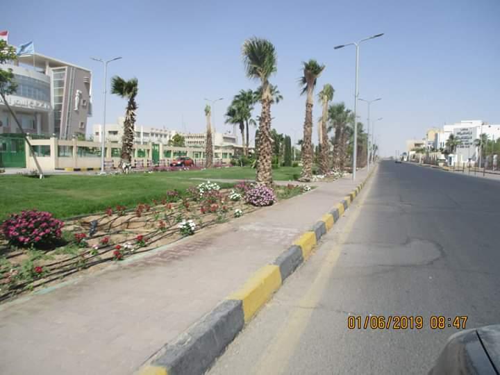 زراعة طريق عبد المنعم رياض بالنباتات بالغردقة (5)