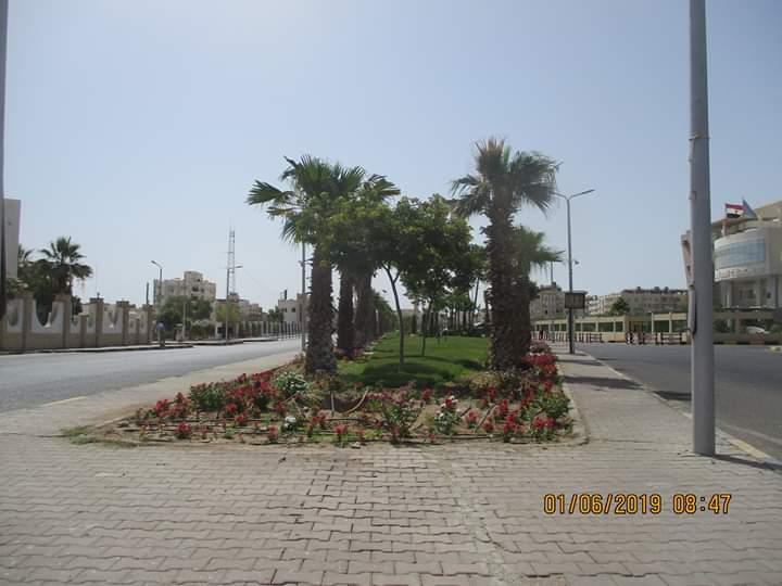 زراعة طريق عبد المنعم رياض بالنباتات بالغردقة (1)