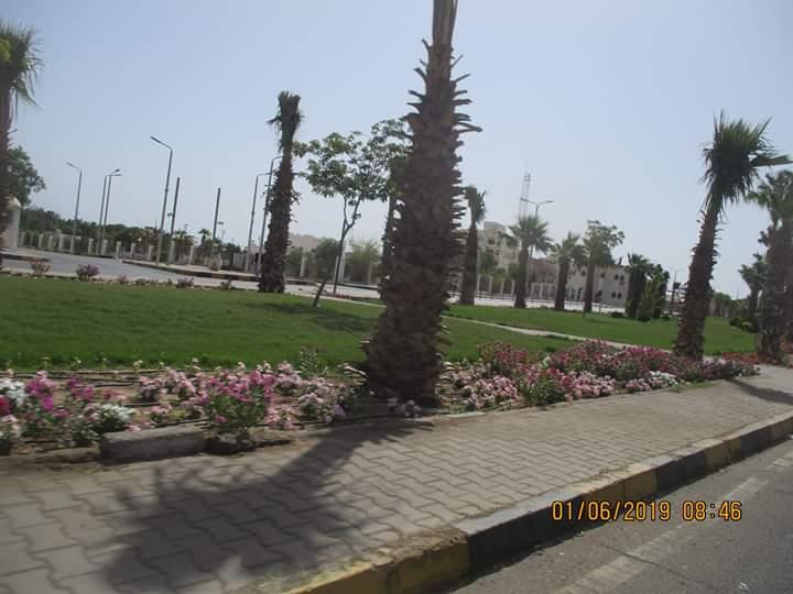 زراعة طريق عبد المنعم رياض بالنباتات بالغردقة (3)