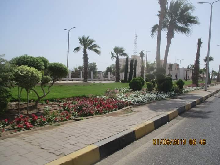 زراعة طريق عبد المنعم رياض بالنباتات بالغردقة (4)