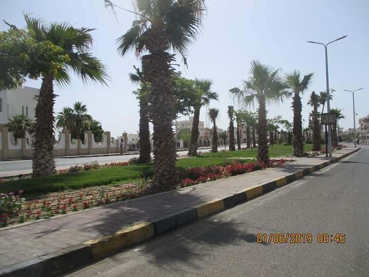 زراعة طريق عبد المنعم رياض بالنباتات بالغردقة (2)