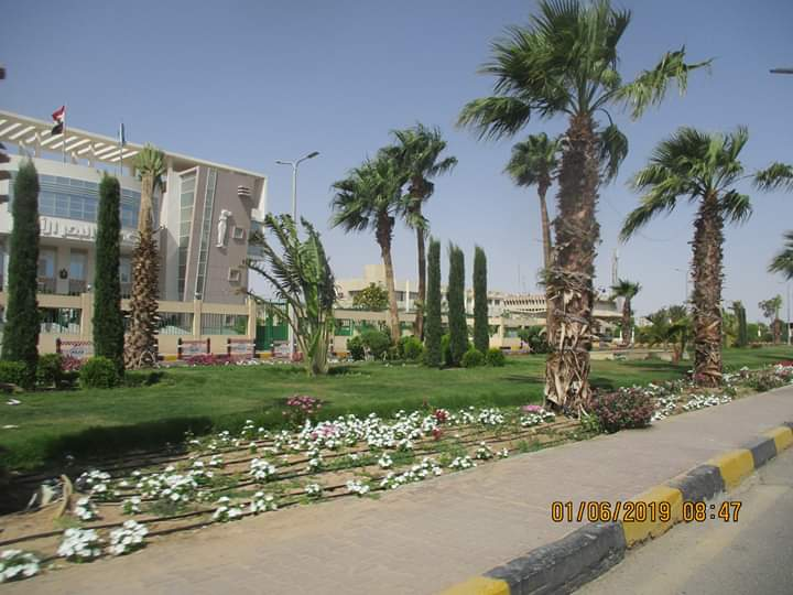 زراعة طريق عبد المنعم رياض بالنباتات بالغردقة (6)