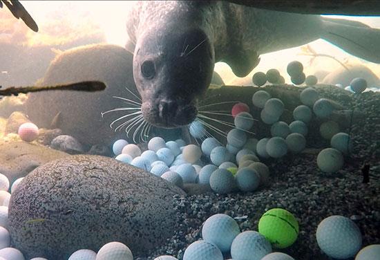 صور.. العشرات من كرات الجولف المفقودة على أرضية المحيط الهادئ (4)