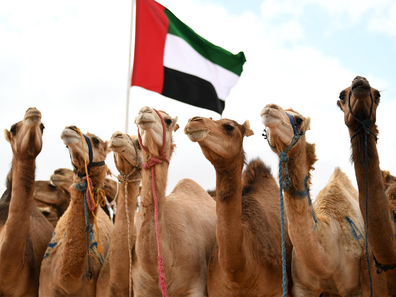 مشاركة الإمارات فى موسم طانطان