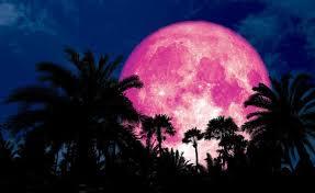 القمر الزهرى