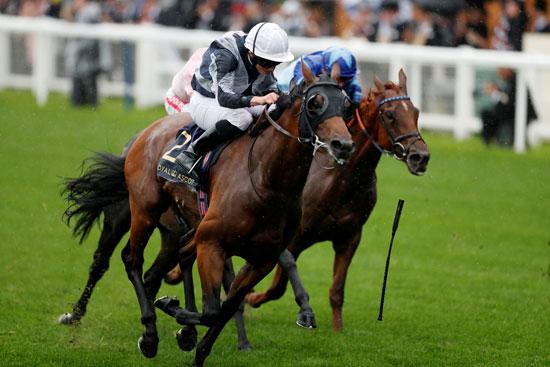 سباق-الخيول