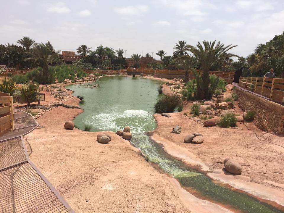 حديقة التماسيح فى المغرب