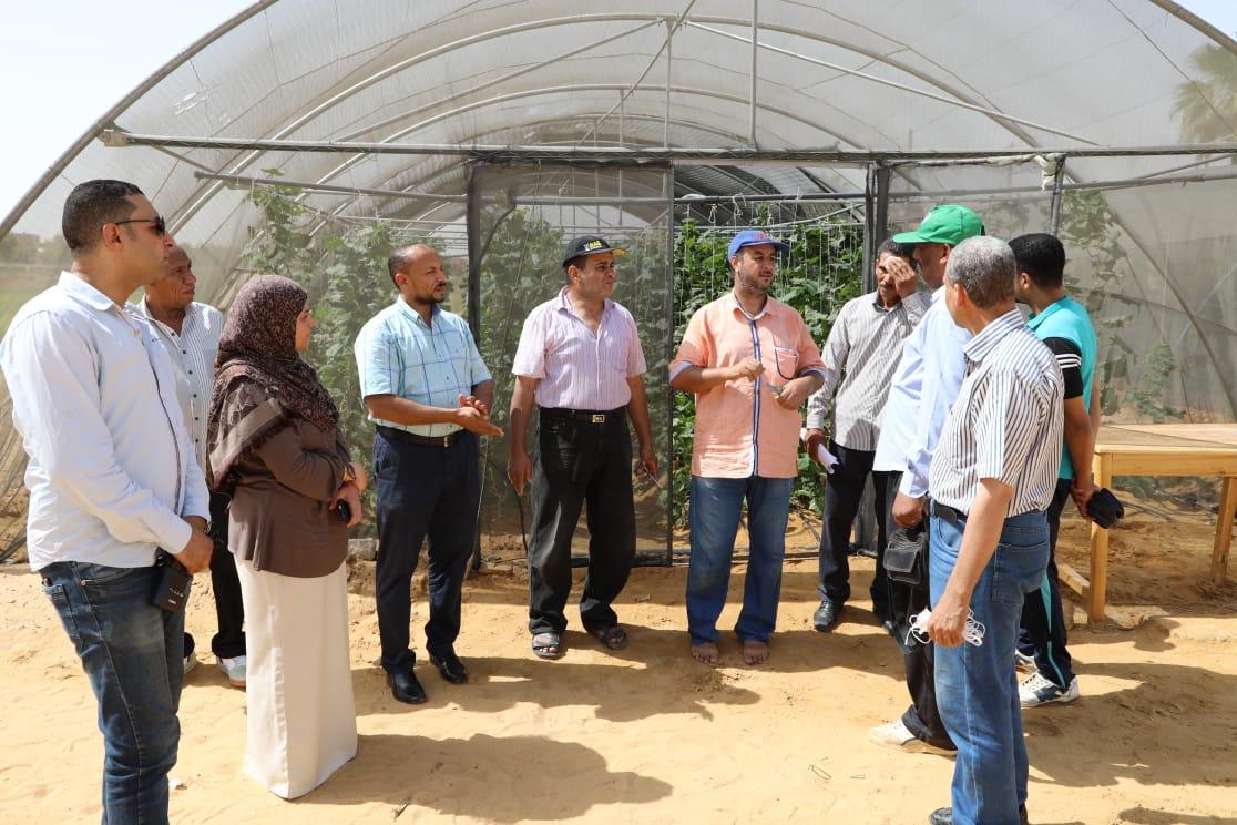 حاصلات الصوب الزراعية بمدرسة الخارجة الزراعية (6)