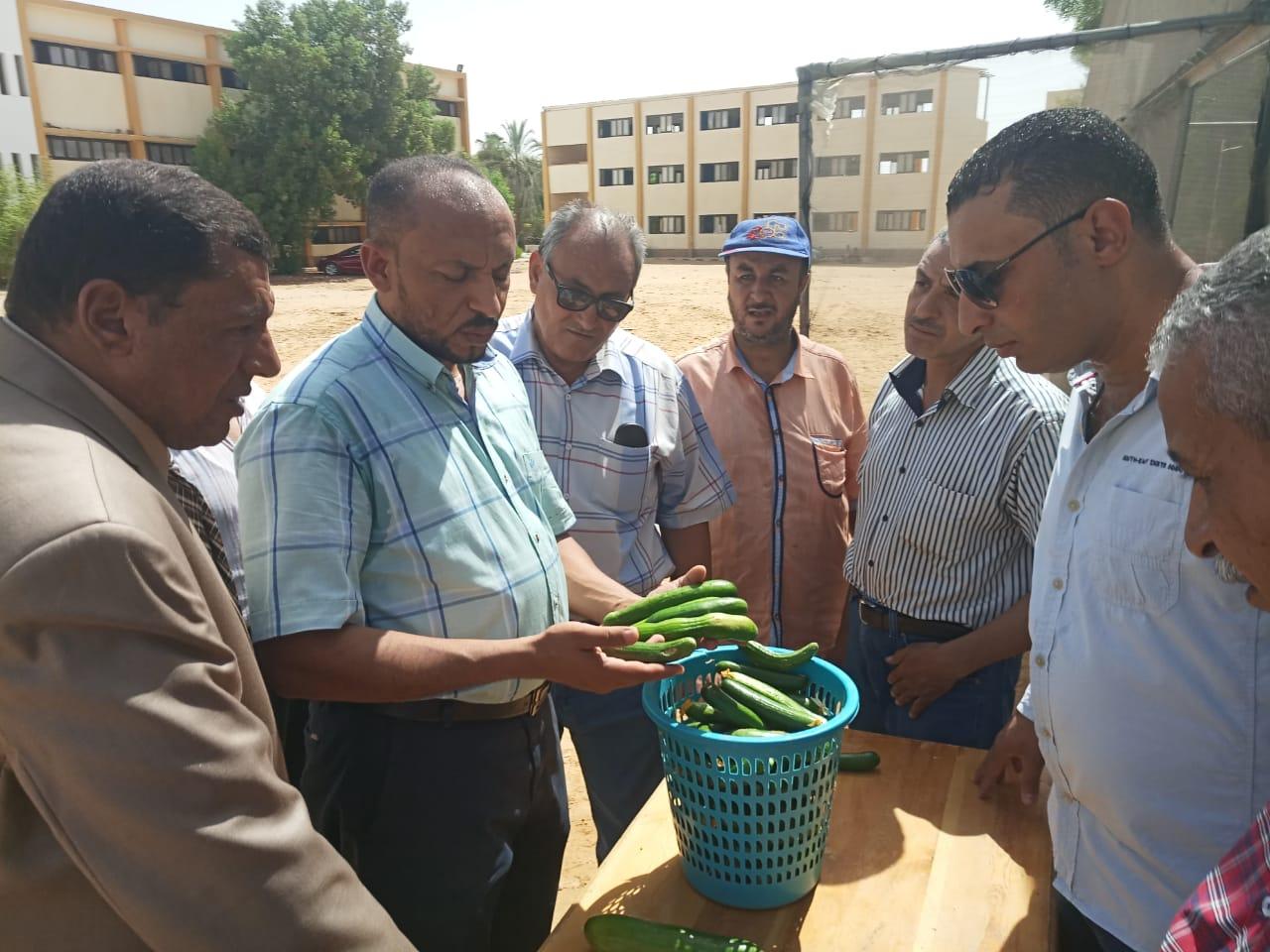 حاصلات الصوب الزراعية بمدرسة الخارجة الزراعية (7)