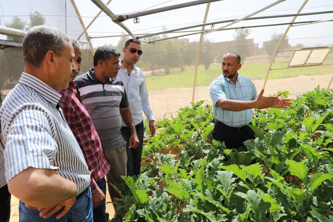 حاصلات الصوب الزراعية بمدرسة الخارجة الزراعية (2)