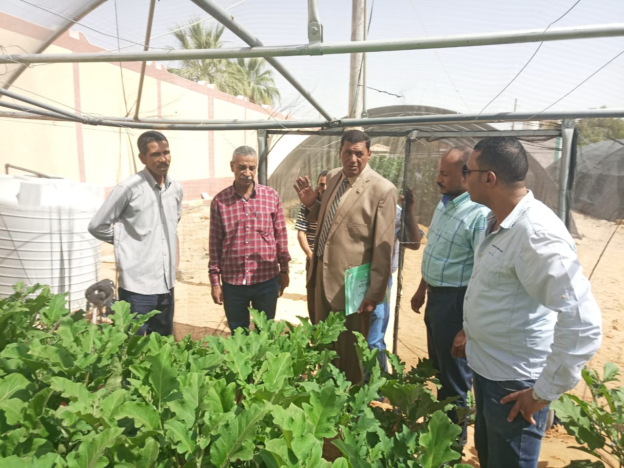 حاصلات الصوب الزراعية بمدرسة الخارجة الزراعية (3)