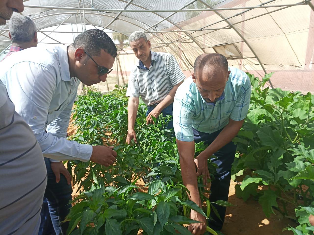 حاصلات الصوب الزراعية بمدرسة الخارجة الزراعية (4)