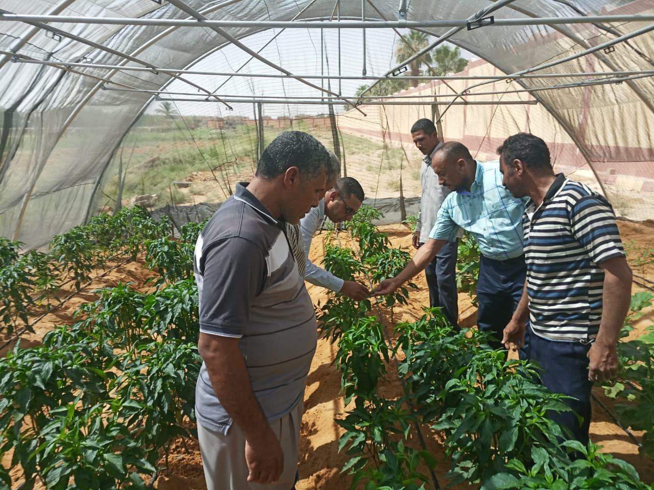 حاصلات الصوب الزراعية بمدرسة الخارجة الزراعية (5)