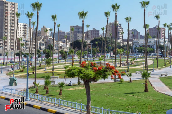 استعدادات محافظة الاسكندرية (3)