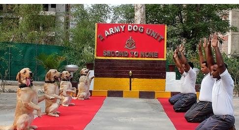 وحدة الكلاب بالجيش الهندى