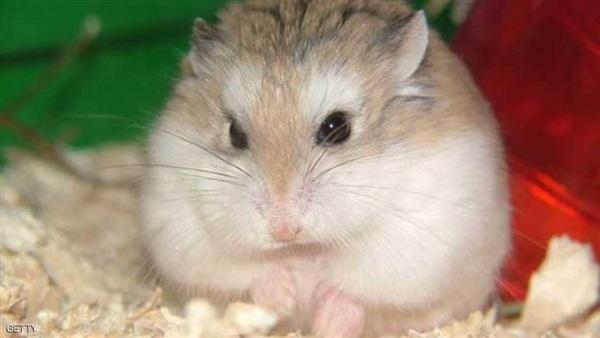 الخوف من الفئران (2)