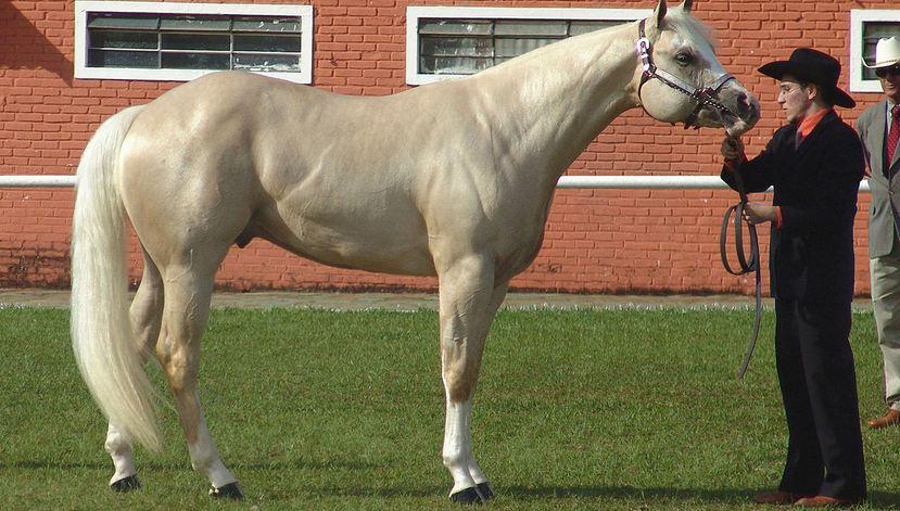 حصان الربع